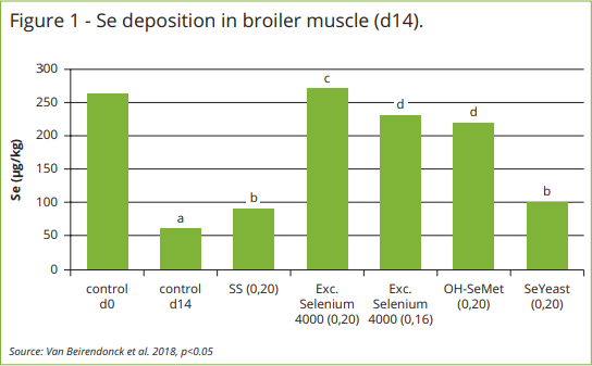 Muscle deposition confirms efficacy of L-Selenomethionine ...